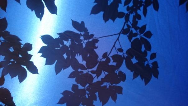 シルエット テント 映る 影 青 木漏れ日 キラキラ 庭 清涼感 ソフト 木の葉 はっぱ 自然 植物 グリーン エコ エコロジー 環境 eco 森林 森林浴 いやし リラックス リラクゼーション やすらぎ 安らぎ 健康 美容 背景 テクスチャ 青葉 若葉 春 緑 夏 秋空 初夏 光 明るい イメージ 5月 背景素材 樹木 木 爽快 風景 景色 ミドリ 屋外 戸外 黄緑 マイナスイオン 8月 6月 7月 7月 8月 9月 10月 やさしい 優しい 癒し 新緑 4月 四月 りラックス バック バックグラウンド 背景画像 背景写真 4月 清潔 清涼 みどり 五月 六月 葉 壁紙 素材 コピースペース 葉っぱ テキストスペース 爽やか さわやか 5月 6月 清々しい 公園 涼しい 涼しげ 涼感 テクスチャー きらめき バックイメージ