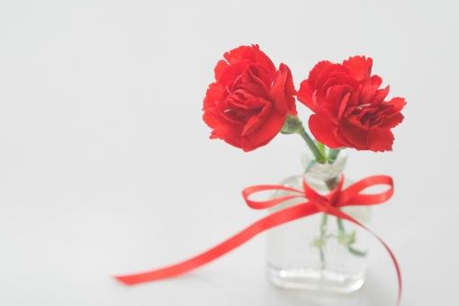 ギフト 贈り物 赤 白背景 コピースペース テキストスペース 背景 バックグラウンド 壁紙 春 イメージ 明るい リボン 小物 雑貨 赤い花 初夏 5月 白 背景素材 素材 植物 可愛い かわいい マクロ クローズアップ 5月 五月 母の日 カーネーション カード メッセージ 感謝 メッセージカード プレゼント ありがとう 気持ち 花 母 白バック イベント 祝い