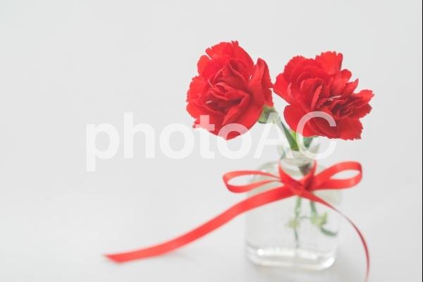 真っ赤なカーネーションの写真