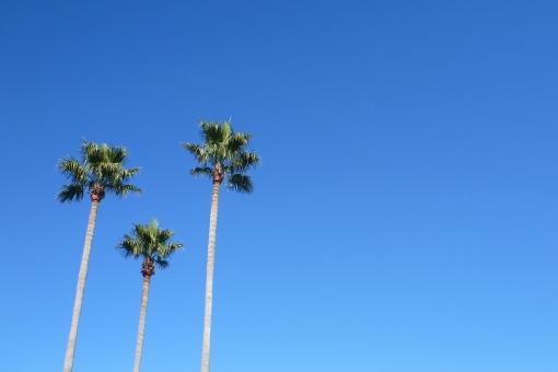 青空とヤシの木の写真