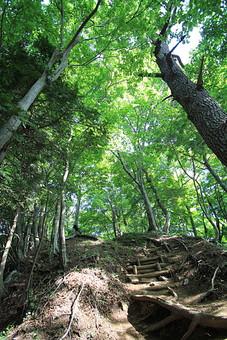 日本 国内 関東 関東山地 観光地 ハイキング 森林浴 トレッキング 登山 山登り 登山道 山 野外 アウトドア 自然 風景 植物 樹木 木立 林 森林 広葉樹 広葉樹林 緑 地面 土 木の根 根上がり 木漏れ日 高木 木段 横木 階段 ローアングル 薄暗い