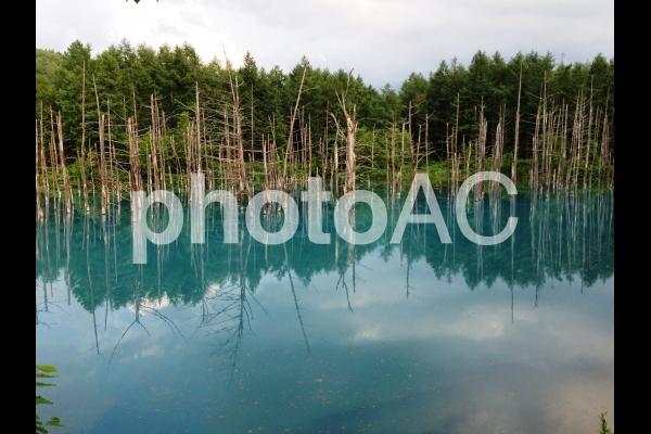 北海道 青い池3の写真