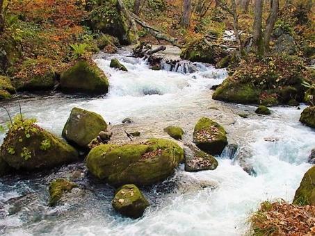 奥入瀬渓流2の写真