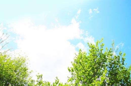 バックグランド 青空 あおぞら そら 背景 緑 枝 葉っぱ 植物 テクスチャ 雲 くも 快晴 お天気 グラデーション 太陽光 日光 uvカット 紫外線 空気 お出かけ日和 行楽日和 水色 おだやか 白い雲 平和 暖かい 日差し 天日干し 布団を干す 見上げる 降水確率 清々しい 晴れ渡る おでかけびより ポカポカ陽気 ぽかぽか陽気 初夏 小春日和 屋外 野外 昼下がり 上空 洗濯日和