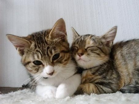 仔猫 赤ちゃん あかちゃん 子猫 猫 ネコ きょうだい 仲良し 大好き かわいい 生後4ヶ月