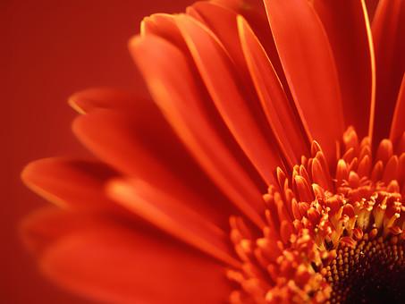花のアップの写真