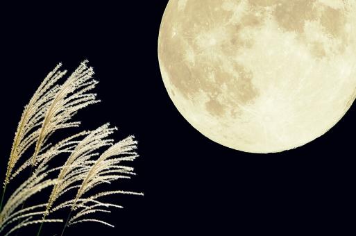 夜空 秋 秋景色 秋の七草 黒背景 ススキ 芒 薄 すすき イネ科 黒バック 自然 風景 植物 白 光 月夜 月光 クレーター 月面 満月 十五夜 望月 フルムーン 合成 中秋の名月 お月様 お月見 moon 横型