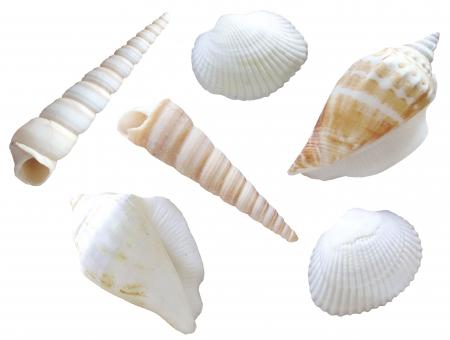 貝殻に関する写真写真素材なら写真ac無料フリーダウンロードok