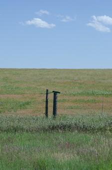 草地 草原 原っぱ  草 緑 グリーン 緑色 フィールド 青空 空 お空 大空 晴天 晴れ 快晴 青色 青い 青天井 蒼穹 蒼天  爽やか 爽快 さっぱりした 健康的 のどか 長閑 柵 フェンス 地平線 空際 視地平線 スカイライン