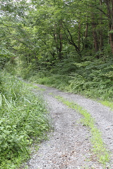 自然 風景 景色 植物 景観 日本 野生 無人 雑草 草 砂利 石 石ころ 木 樹木 林 森林 山奥 山道 道 枝 幹 葉 葉っぱ 緑 茶色 カーブ 曲がる