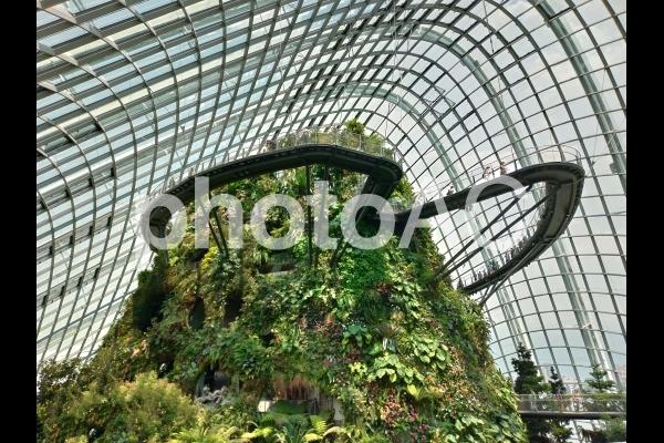 シンガポール ガーデンズバイザベイ クラウドフォレストの写真