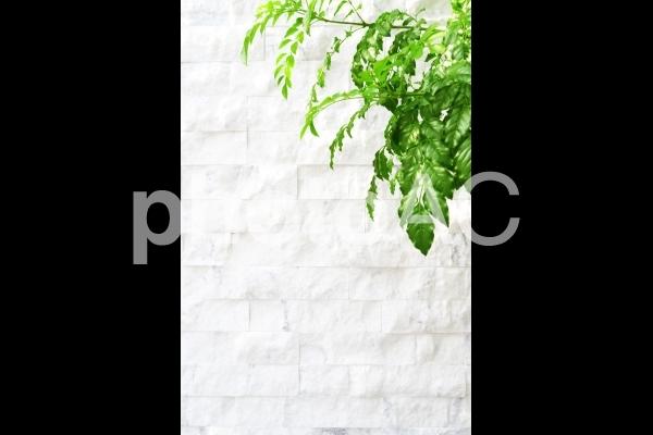 白いレンガ壁の背景と新緑の木,縦長|写真素材なら「写真AC