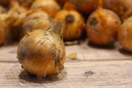 玉ねぎ たまねぎ 野菜 材料 食材 料理 土付き 土 食べ物 玉葱 収穫 農業 玉ネギ 畑 植物 新鮮 自然 食事 食品 素材 フード 食物 食べる 農作物 作物 タマネギ