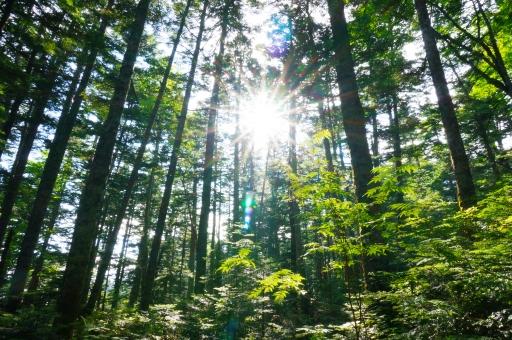 もり 森 森林 背景 風景 バックグラウンド コピースペース 登山 ハイキング 登山客 森林浴 林 日光 木漏れ日 葉 枝 木 マイナスイオン 有酸素運動 緑 新緑