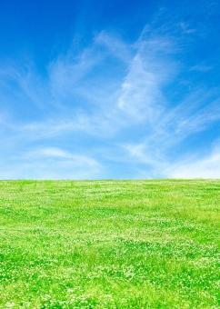 青空とクローバーの草原_3の写真