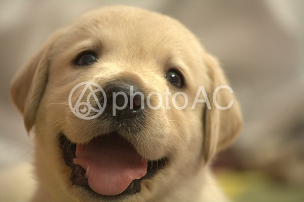 子犬の顔アップの写真