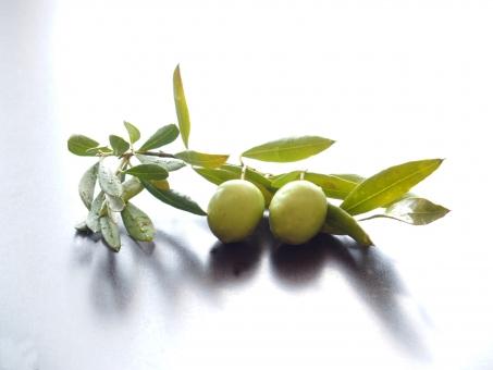 オリーブ オリーブの実 果実 オリーブオイル 植物 オリーブの葉 緑 グリーン 葉っぱ 種子 食べ物 木の実 自然 健康 美容