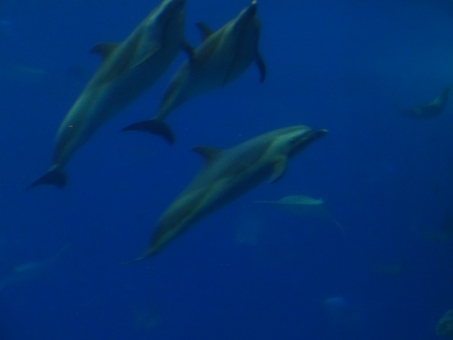 海 うみ 仲間 兄弟 きょうだい イルカ いるか 水族館 水 青 あお 水の中 楽しい たのしい 癒し 遊び およぐ 泳ぐ