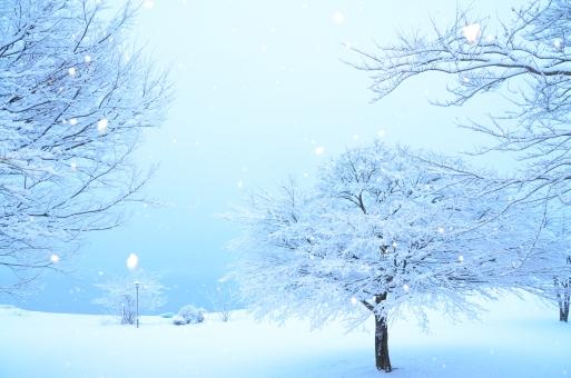 木々と雪原 青白い背景の写真