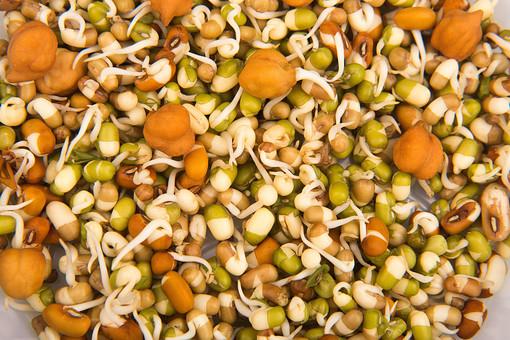 大豆 青大豆 ダイズ 野菜 豆 まめ 生豆 発芽 芽 ヒヨコ豆 植物 食べ物 緑 青 料理 食品 食材 和食 収穫 調理 和風 種子 粒 マメ 食べもの 食品 農産物