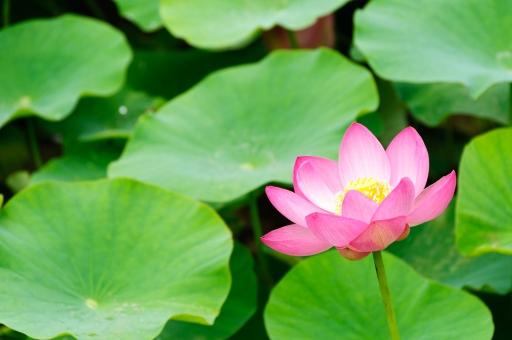 6月の花に関する写真写真素材なら写真ac無料フリー