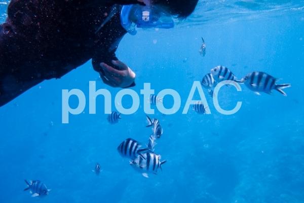 沖縄の青の洞窟シュノーケリングで餌をやっているところの写真