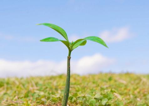 新芽 新しい命 生命 生命保険 春 育てる 植物 培養 成長 コピースペース 青空 白い雲