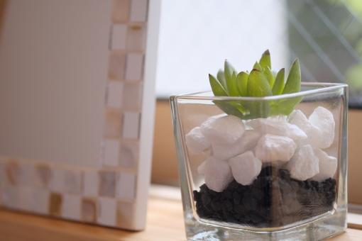 多肉植物 観葉植物 ニッチ インテリア 緑 植物 ガラス ソフト 余白 窓辺 横位置 窓 フォトフレーム