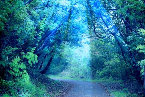 森に射す神秘的な光の写真