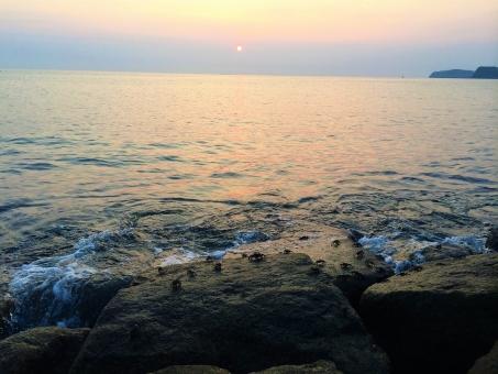 夕暮れの蟹の写真
