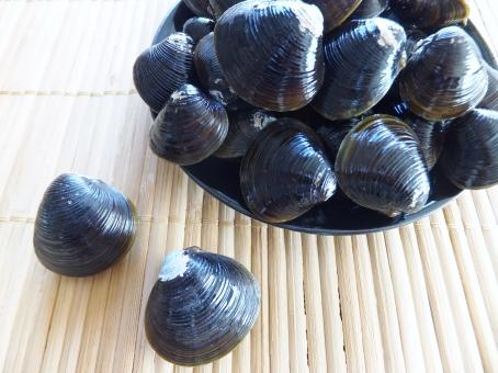 しじみ 蜆 シジミ 魚介類 魚介 新鮮 市場 鮮魚 貝類 貝殻 貝 和食 和 砂抜き 料理 調理 味噌汁 汁物 しじみ汁 シジミ汁 食材 だし ダシ 健康 健康食品 オルニチン 肝臓 二日酔い 飲みすぎ たくさん