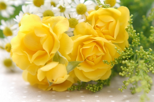 黄色 マトリカリア 母の日 父の日 緑 5月 6月 五月 六月 おめでとう メッセージ カード フラワーアレンジ 行事 春 華やか きれい 贈り物 美 アレンジ バースデー お祝い バック 素材 背景写真 ローズ フラワー バックグラウンド アレンジメント 癒し いやし 健康 アロマ 花 植物 薔薇 ばら バラ 綺麗 美しい 切花 切り花 花びら フラワーアレンジメント プレゼント ギフト サプライズ プロポーズ 告白 愛 ホワイトデー 誕生日 記念日 初夏 5月 6月 花束 背景 背景画像 背景素材 美容 エステ イメージ 壁紙 明るい