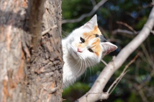 ネコ 猫 ねこ 野良猫 のらねこ ノラ猫 ノラネコ 三毛 みけ ミケ 三毛猫 ミケ猫 みけ猫 子ネコ 子猫 小猫 公園 樹木 木 2月 二月 小春日和 春 冬