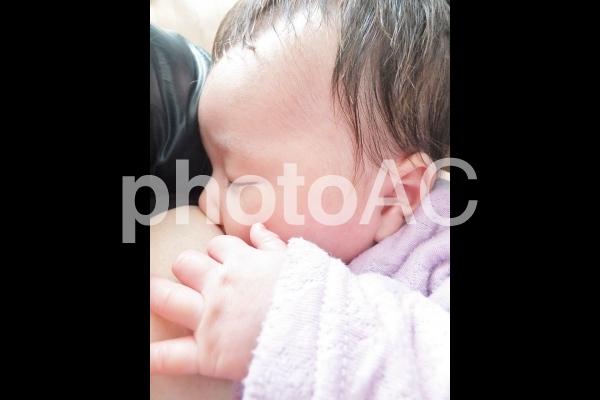 母乳を飲む赤ちゃん 1の写真