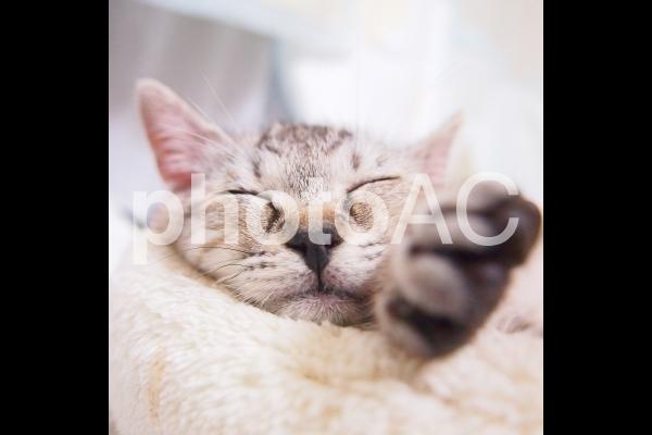 猫ベッドで眠る猫の写真