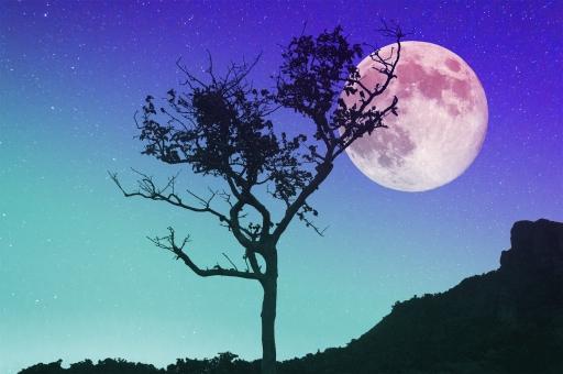 木と月の写真