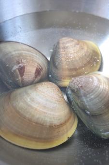 食べ物 食物 食品 食材 ハマグリ はまぐり 蛤 二枚貝 砂抜き 塩水 下ごしらえ 調理 料理 水産物 海産物 海の幸 魚介類 魚貝類 具材 材料 鍋物 お吸い物 潮汁 酒蒸し ひな祭り 縁起物 春 旬 新鮮