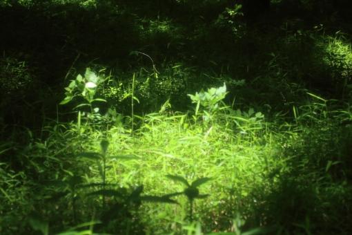 時間 木陰 緑 散歩道 ひだまり 日だまり スポットライト 森 森林 林 ハイキング ピクニック 涼しい 楽しい 秘密 休憩 呼吸 深呼吸 新緑 のんびり 木漏れ日 こもれび 熱中症 ゆっくり 若葉 青葉 バックグラウンド 爽やか 背景デザイン 自然 ナチュラル 幸せ 春 初夏 カード メッセージ 背景 壁紙 植物 5月 メッセージカード 背景素材 素材