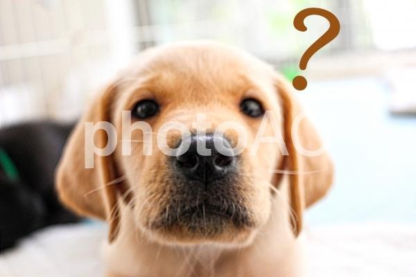 かわいい子犬 はてな?の写真