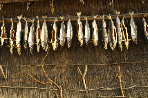 伝統のアイヌ民族と鮭干しの写真