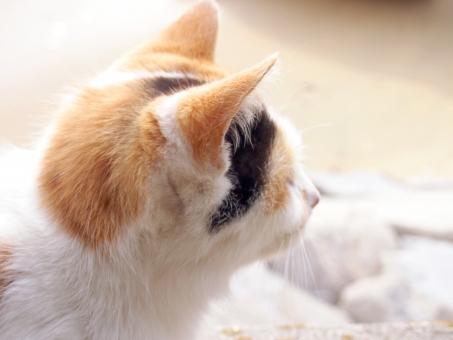 猫 ねこ ネコ 三毛猫 みけねこ ミケネコ 横顔 島 男木島 瀬戸内海 瀬戸内 香川県 砂浜 浜辺 かわいい 動物
