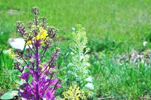 田圃 ダイコン 菜の花 せり なずな 七草 芹 なずな ごぎょう はこべら ほとけのざ すずな すずしろ 紫 自然 植物 風 そよ風 波 空気 流線 木漏れ日 木洩れ日 太陽 日 黄緑 新緑 明るい 山 林 葉っぱ 木の葉 木葉 はっぱ 爽やか 木の枝 小枝 風景 木 樹木 森 グリーン エコ エコロジー 環境 eco eco 森林 森林浴 森林セラピー いやし リラックス リラクゼーション やすらぎ 安らぎ マイナスイオン 健康 美容 背景 背景素材 テクスチャ テクスチャー バックグラウンド 5月 6月 7月 8月 9月 10月 夏 緑 春 初夏 癒し きらめき キラメキ 優しさ やさしい 優しい