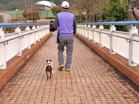 犬 いぬ ペット 犬と家族 祖父 お爺ちゃん ペットと家族 ボストンテリア 道 後姿 歩く お散歩 お爺ちゃんの散歩