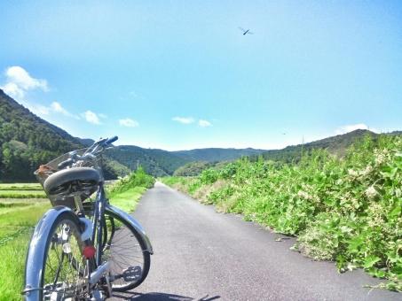 晴れ 晴天 青空 青い ブルー 空 そら スカイ スカイブルー みずいろ 水色 雲 太陽 ひかり 陽射し 日光 きらきら 自然 しぜん 風景 景色 田舎 のどか ゆっくり 癒し リラックス さんぽ 散歩 サイクリング 自転車 走る 爽快 風 さわやか 気持ちいい リフレッシュ 空気 山 森 林 木 草 みどり 緑 グリーン 道 綺麗 きれい 美しい ビューティフル 休日 休み たのしい エンジョイ ハッピー