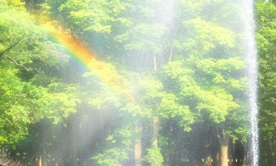 噴水 虹 七色 水しぶき 飛沫 樹木 緑 グリーン 明るい 背景 バックグラウンド キラキラ 輝く 赤 青 テクスチャー テクスチャ 木 メッセージカード メッセージ 水 光 公園 葉 飛び散る 風 流される 風の吹くまま
