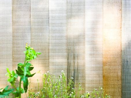 板 カベ 壁 かべ 草 花 グリーン 緑 植物 塀 板塀 素材 光 木漏れ日 日 陽 影 待ち受け 背景 背景素材 シャドウ 雑草 余白 草花 ハイライト 太陽 庭 ガーデン web素材 カフェ ショップ イメージ 文字スペース コピースペース テキストスペース デザイン素材 wood ウッド 陽だまり 自然 天然 天然素材 ナチュラル ナチュラルウッド マテリアル テクスチャ diy 日曜大工 陰影 春 初夏 野外 屋外 エクステリア 住宅