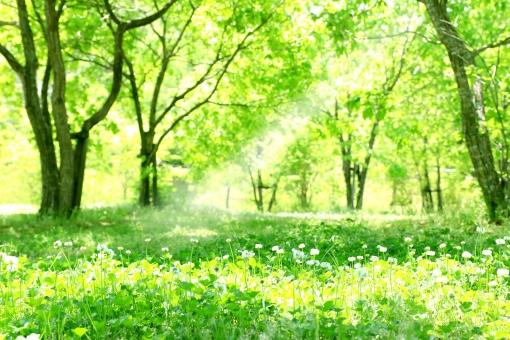 新緑の木漏れ日の写真