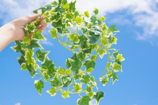 若葉 グリーン 女性 手 青空 空 雲 太陽 爽やか さわやか コピースペース 春 リラクゼーション リラックス 緑 青 ブルー 水色 夏 秋空 葉 風景 初夏 光 明るい イメージ 健康 清々しい みどり 背景 壁紙 背景素材 自然 テキストスペース 植物 樹木 木 素材 バック バックグラウンド 背景写真 葉っぱ 景色 新緑 クリーン リフレッシュ
