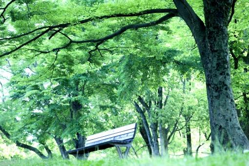 自然 植物 風景 樹木 木の葉 木陰 木漏れ日 新緑 若葉 新芽 初夏 春 夏 四月・五月 六月・七月・八月 ベンチ 公園 森 林 休憩 休息 休日 日曜日 のんびり オフタイム 癒し 自分の時間 静かな時間 デート 読書 爽やかイメージ 清々しい 涼やか ポストカード 待ち受け画像 背景 テクスチャー コピースペース バックスペース 野外アウトドア 光を浴びて 光透過光 光溢れる