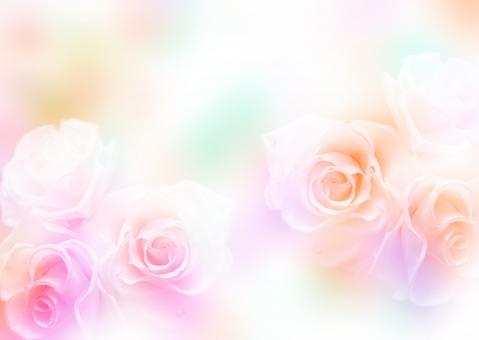 バラ 薔薇 ばら 七色 淡い 背景 壁紙 バックグラウンド テクスチャ エステ きれい 美しい 花 ウェディング ブーケ ブライダル 結婚 結婚式 飾り 花飾り 花模様 装飾 デコレーション 美容 母の日 ホワイトデー バレンタインデー 誕生日 ギフトカード メッセージカード
